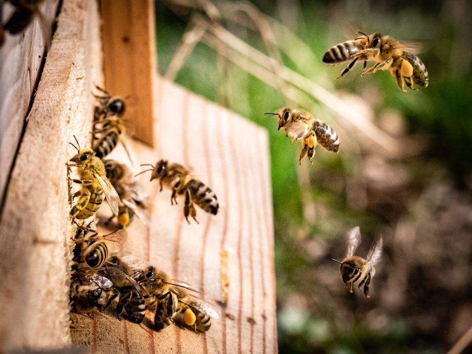 Čebelarstvo je veliko več kot le točenje medu
